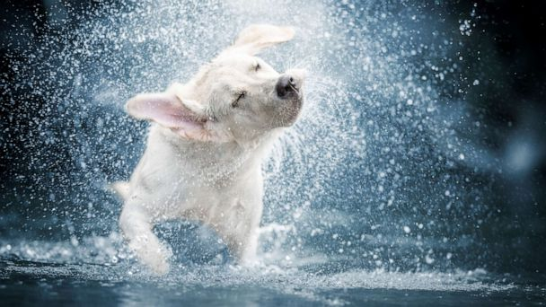 How to keep your pets safe and cool in a heat wave