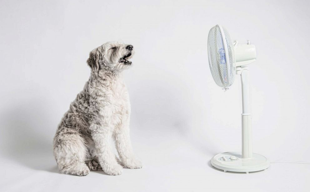 PHOTO: The dog sits in front of a fan.