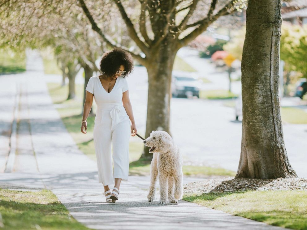 PHOTO: In this undated file photo, a woman walks her Standard Poodle.