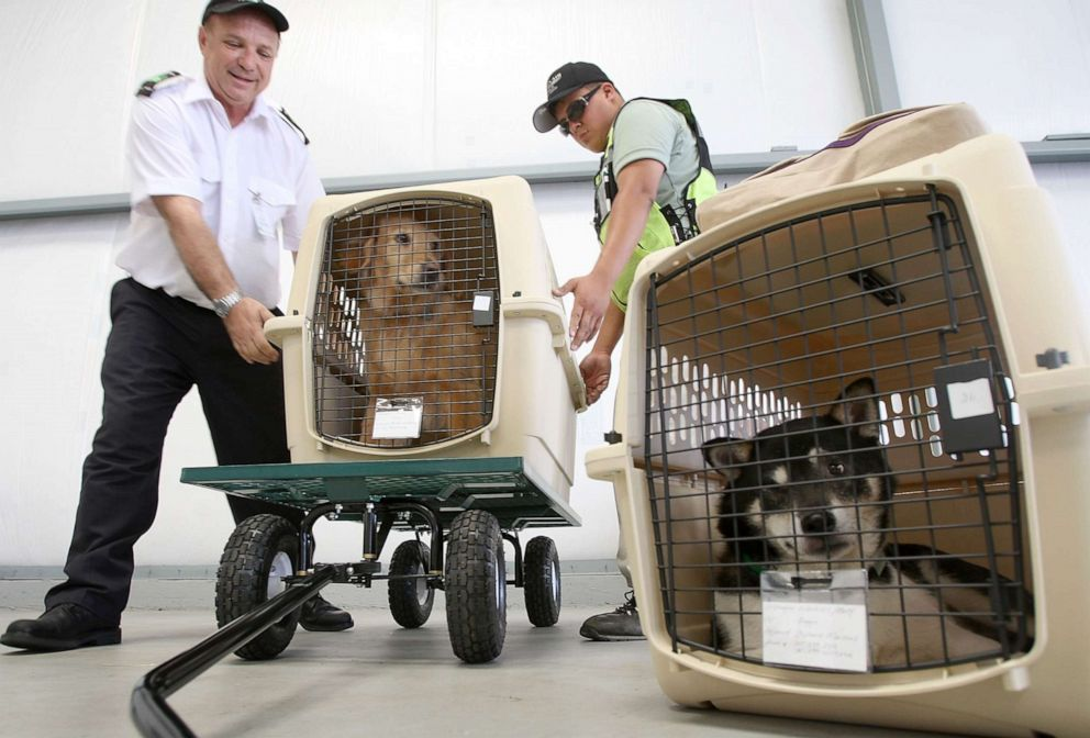 PHOTO: President and CEO Don Weisel helps load pets for take-off on the southern California maiden voyage of Pet Airways on July 16, 2009 in the Los Angeles-area city of Hawthorne, California.