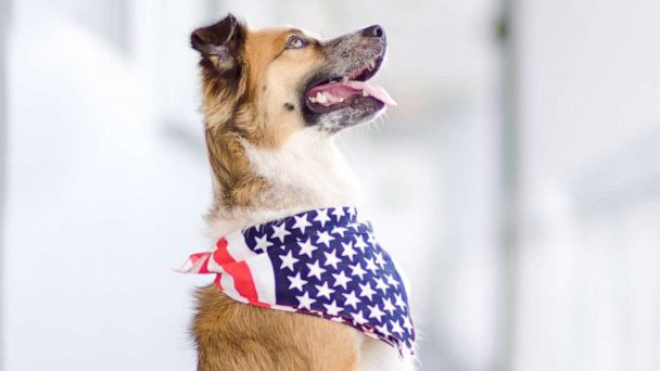 July 4th fireworks can be stressful for dogs  These 6 tips