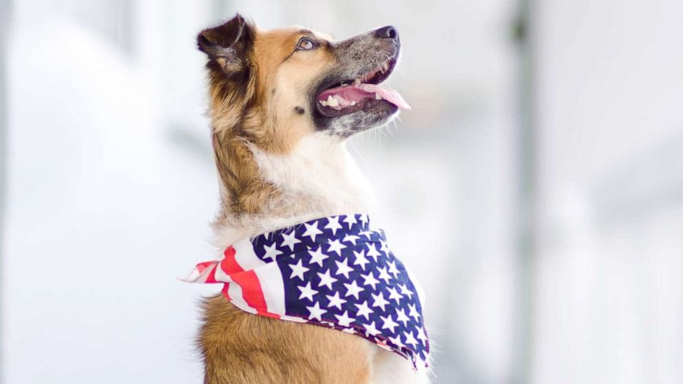 July 4th fireworks can be stressful for dogs  These 6 tips can keep