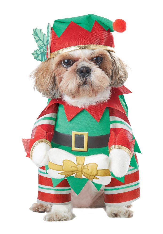 PHOTO: Elf Pup Dog Costume