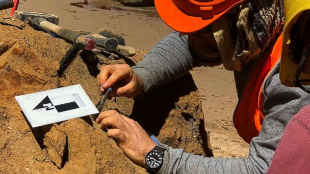 Australian teacher finds massive prehistoric shark teeth twice the size of a Great White's