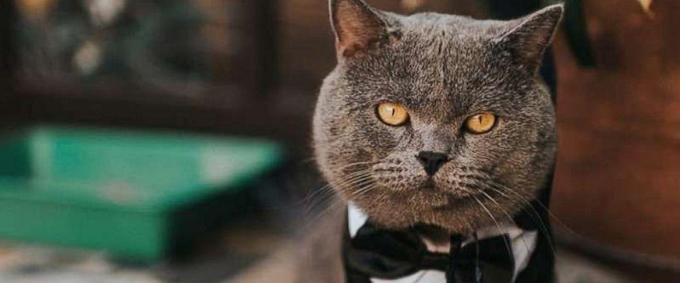 PHOTO: cat groomsman wedding Prince Michael