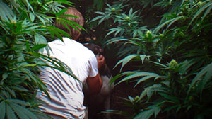 Legal Pot: Death of the Emerald Triangle?