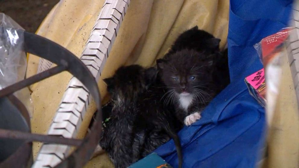 ABC News' Rob Marciano encountered stray kittens stranded in the storm zone following Hurricane Michael in Panama City, Florida.