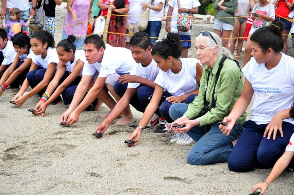 PHOTO: Jane Goodall and Roots & Shoots members in Santa Marta, Columbia, release baby sea turtles.