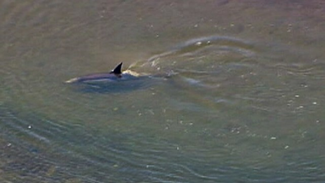 Video Fish And Officials Worked To Rescue Dolphin In Bolsa Chica Wetlands