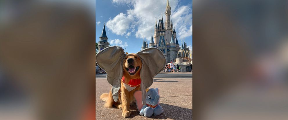 PHOTO: This 2-year-old service dog just took a trip to Disney World.