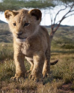 New Lion King Live Action Trailer Will Give You Chills Gma