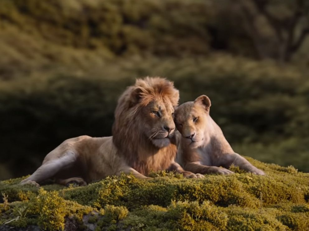 PHOTO: A scene from Lion King.