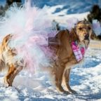 Kodie first gained online attention for her sweet maternity photos snapped by her owner, Chelsie Garrels of Montana.