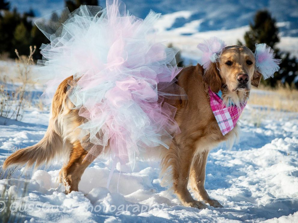 PHOTO: Kodie first gained online attention for her sweet maternity photos snapped by her owner, Chelsie Garrels of Montana.