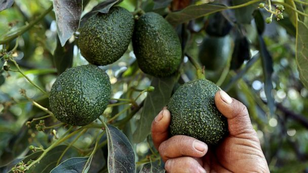 For National Avocado Day, win a grove in Mexico or $5K to buy as many avocados as you'd like