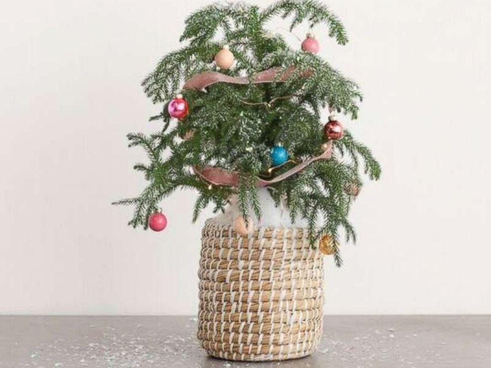 PHOTO: Christmas mini tree.