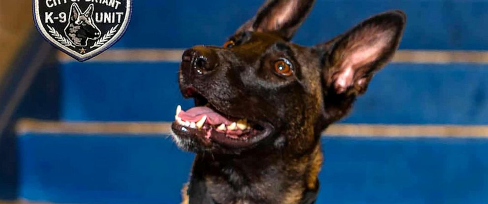 PHOTO: Mya, a 2-year-old Belgian Malinois, posed for the picture that appeared on a page dedicated to the staff of Bryant High School in Bryant, Ark.