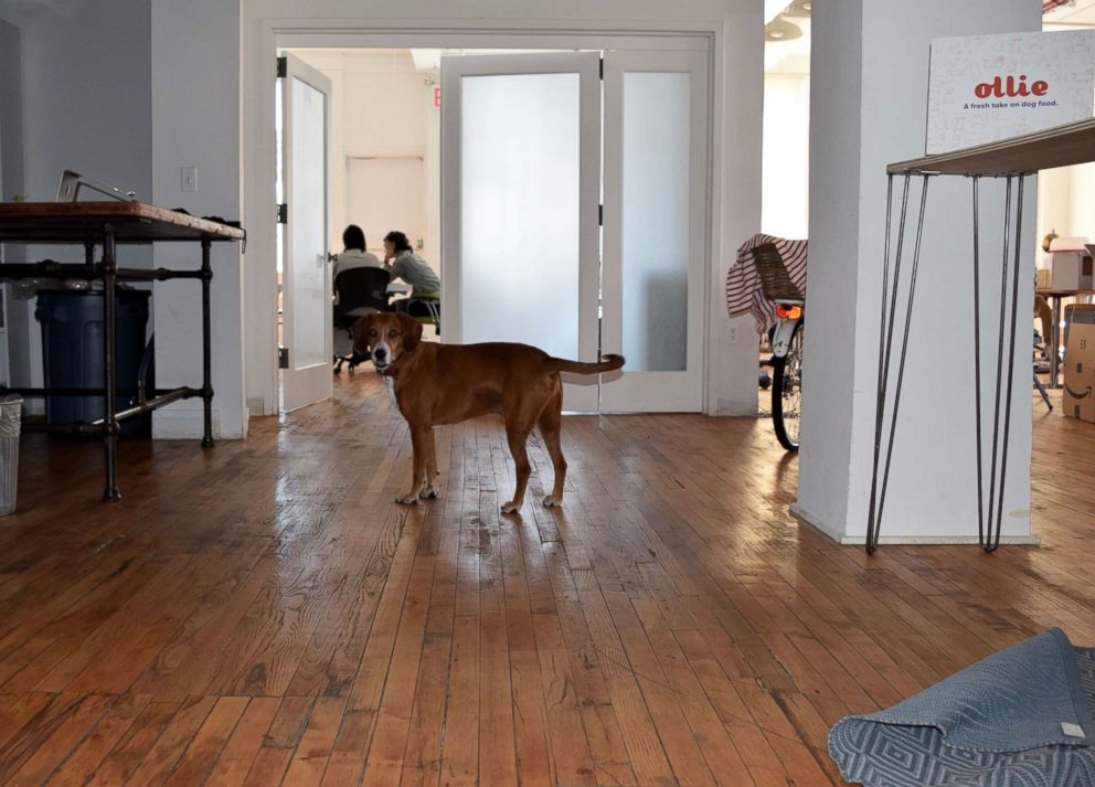 Gabby Slome's dog Pancho visits the office.