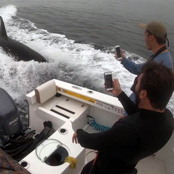 Fishermen's unexpected Orca encounter caught on camera off San Diego coast