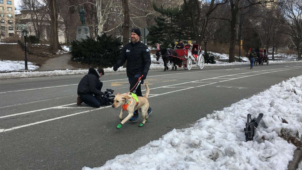 Tom Panek trains for the half marathon with the help of a guiding eyes dog.