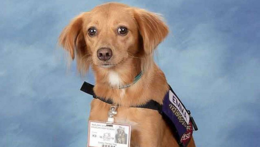 Dogs who helped the students heal after Parkland shooting have their own yearbook page