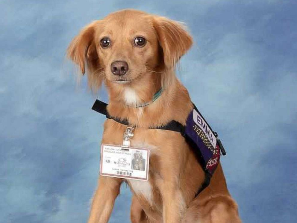 PHOTO: Comfort dogs used at Marjory Stoneman Douglas High School after the school shooting pose here for their yearbook photos.