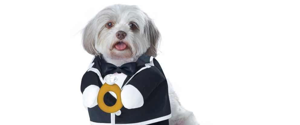 PHOTO: Puppy Love Groom Dog Costume