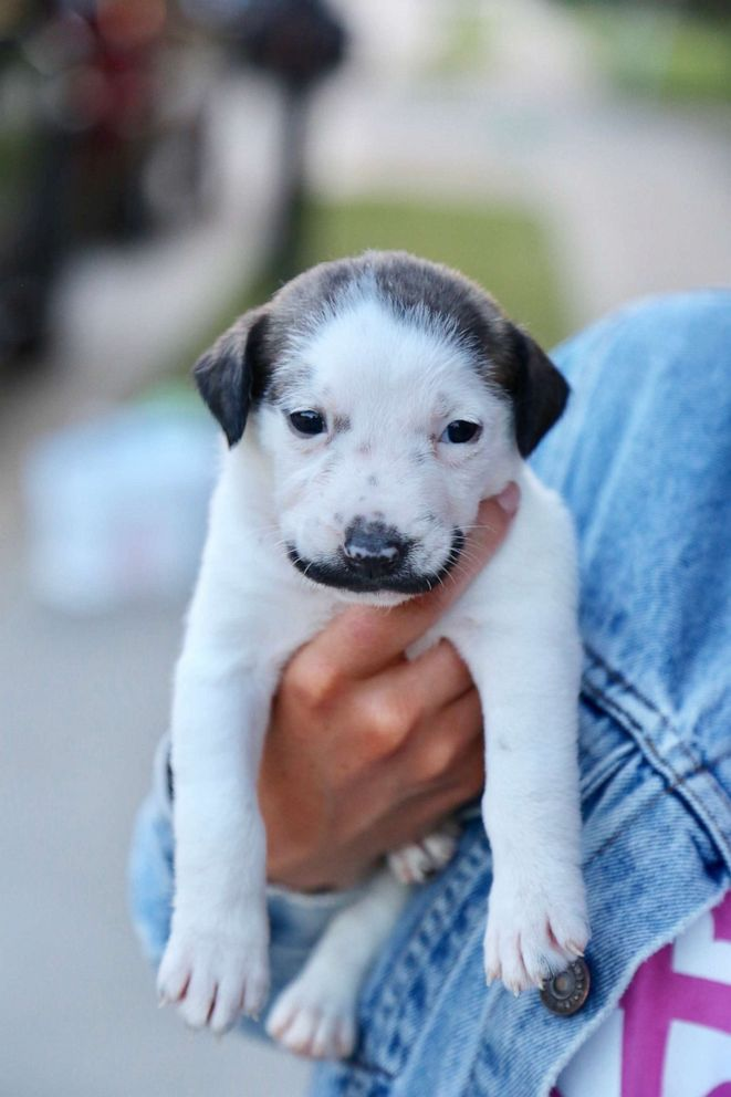 This adorable puppy with a mustache is up for adoption and