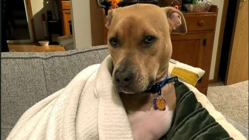Rosie was adopted by Kelly Connelly after the dog spent the holidays with her through the Franklin County Dog Shelter and Adoption Center sleepover program.