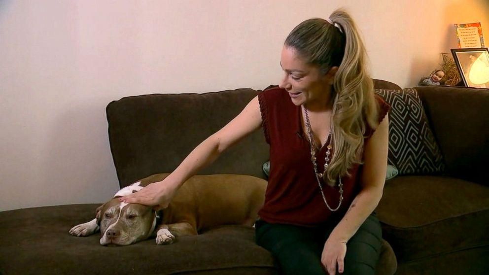 PHOTO: Sadie, a pit bull, is being hailed a hero after notifying police about a gas leak at her owners home.