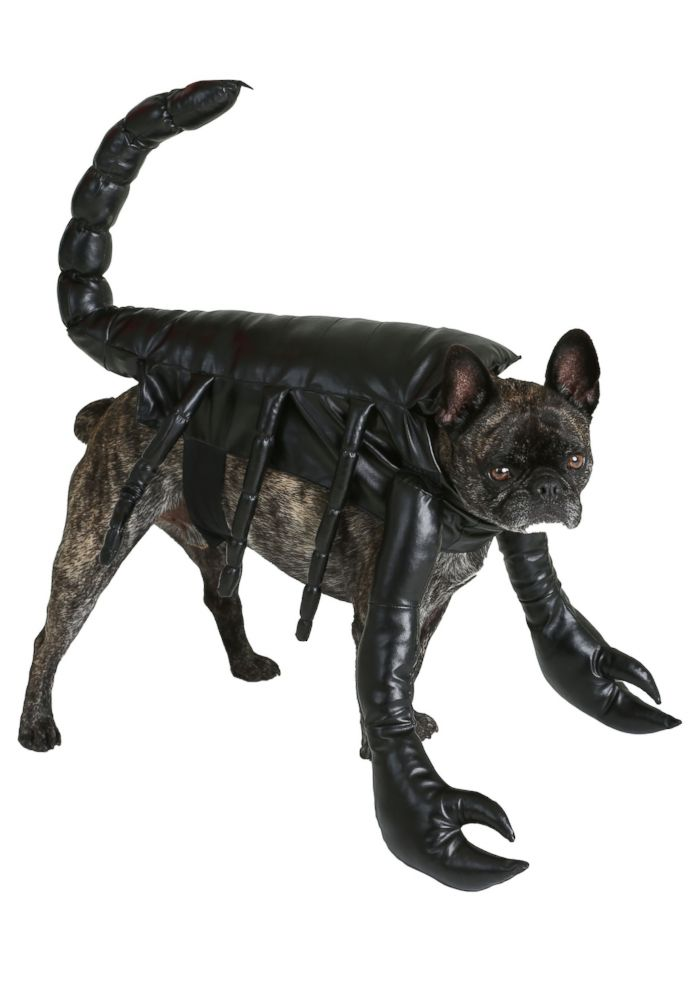 PHOTO: Scorpion Dog Costume