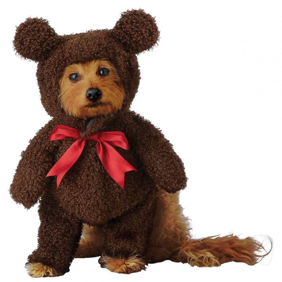 PHOTO: Teddy Bear Pup Pet Costume