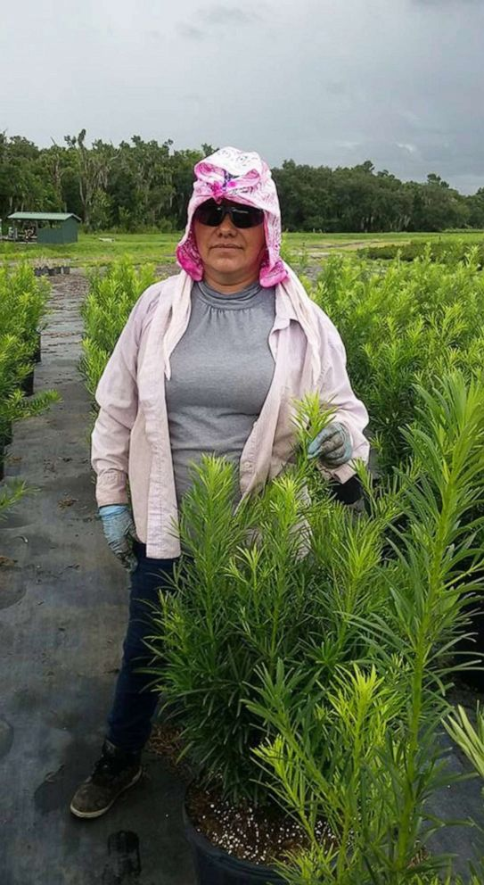 PHOTO: Maria Lagunas is seen working in a field in Polk County, Fla. in an undated photo.