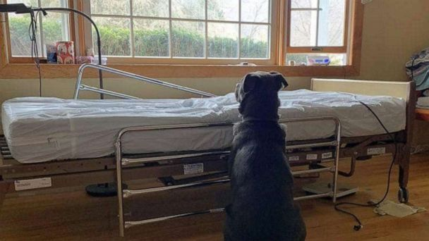 Heartbreaking photo of dog waiting for deceased owner prompts adoption offers worldwide