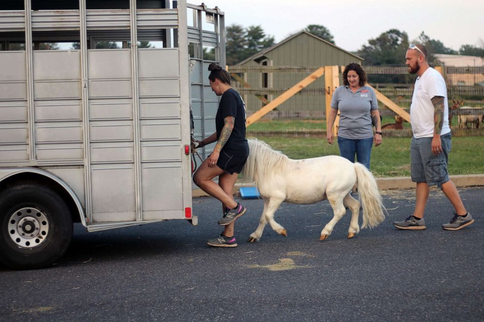 PHOTO: Waffles is escorted into a trailer for his ride home with Hemingway.