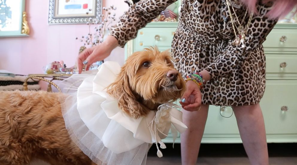 PHOTO: A dog is fitted for clothing at Los Angeles boutique Fifi & Romeo.