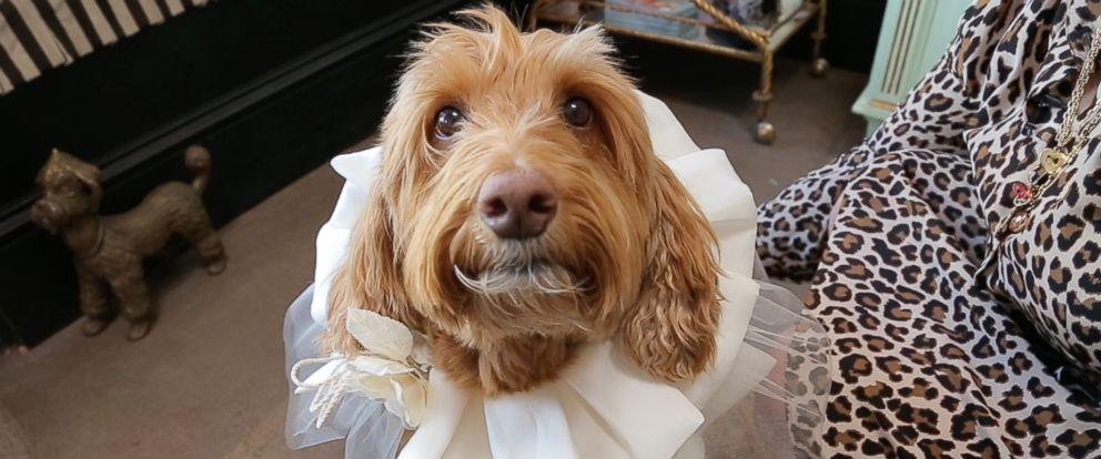 PHOTO: Dog poses with handcrafted wedding attire designed by Fifi & Romeo.