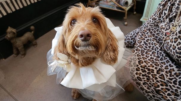 Your dog can be a part of your wedding with these dog-fits for your special day
