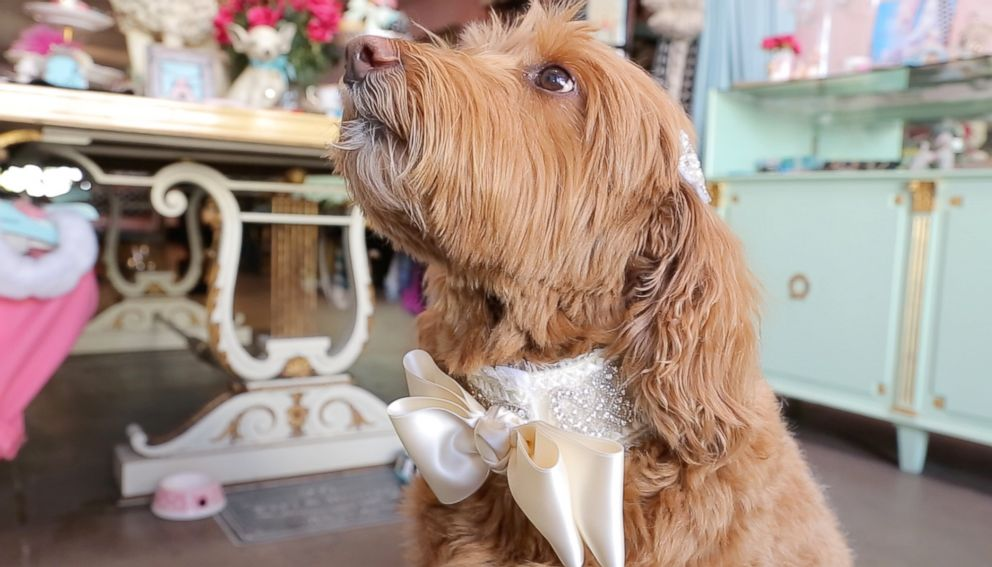 PHOTO: A stylized collar for a dog to wear in a wedding designed by Fifi & Romeo.