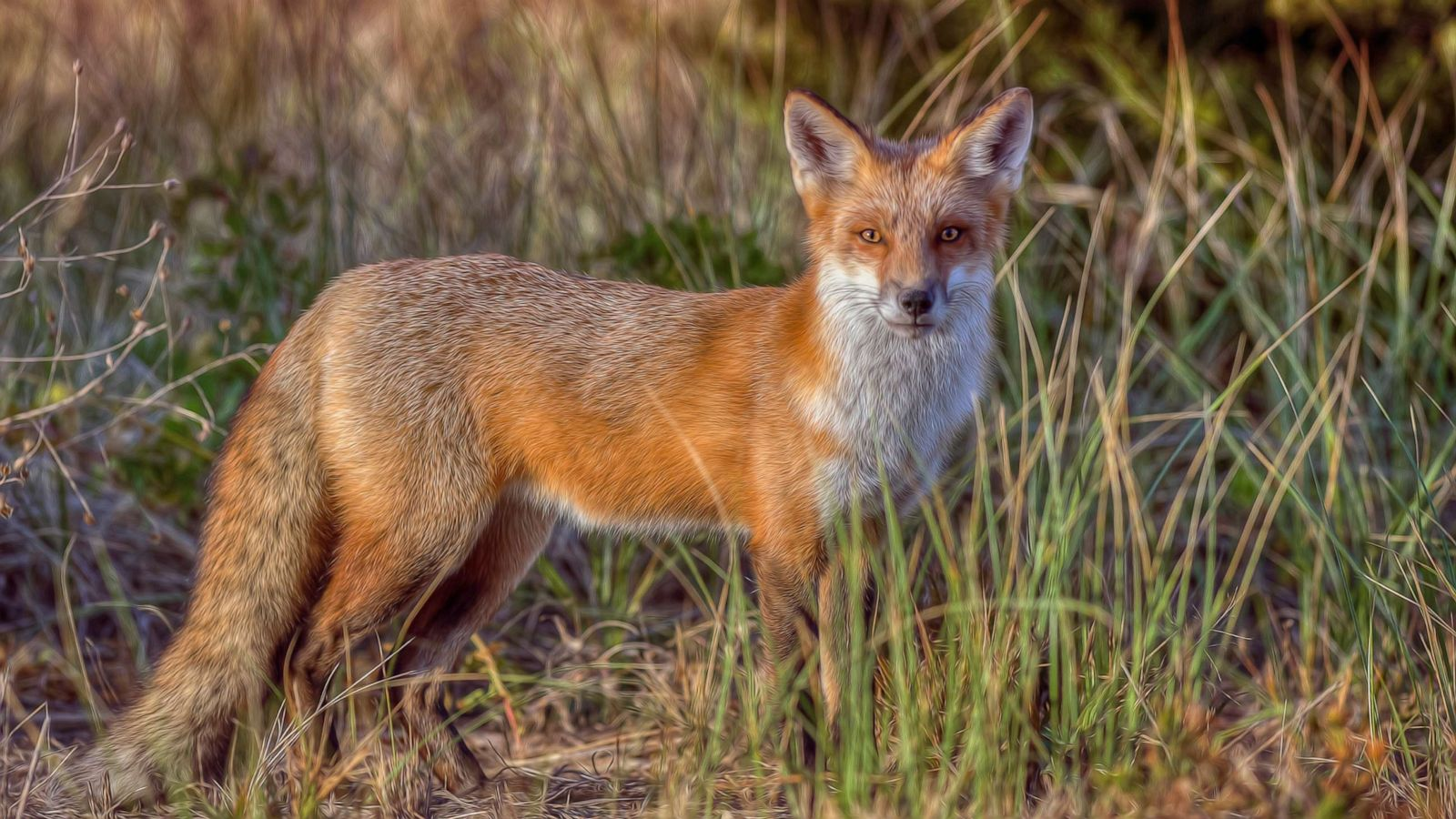 Fox In New Jersey That Bit 5 Sent 3 To Hospital Is Killed Police Abc News
