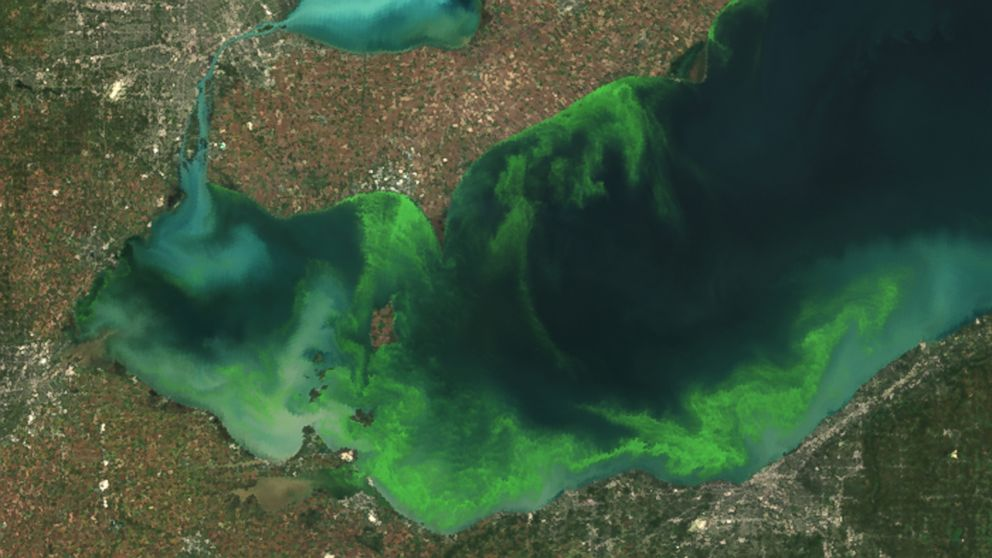 This satellite image provided by NOAA shows the algae bloom on Lake Erie in 2011.