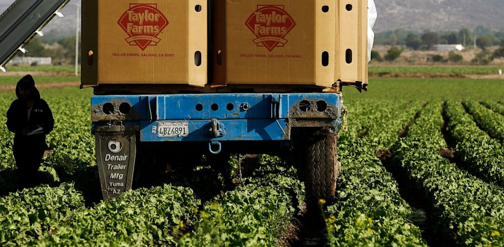 PHOTO: Taylor Farms de Mexico, S. de R.L.