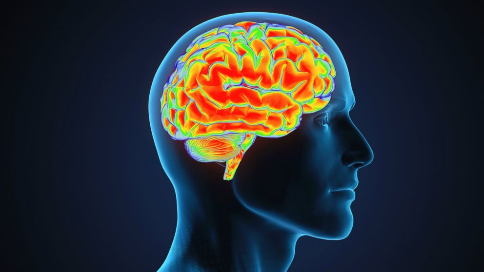 An illustration of a human brain is pictures in this stock photo.