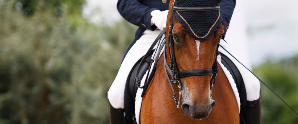 PHOTO: A study has highlighted the risks of horseback riding