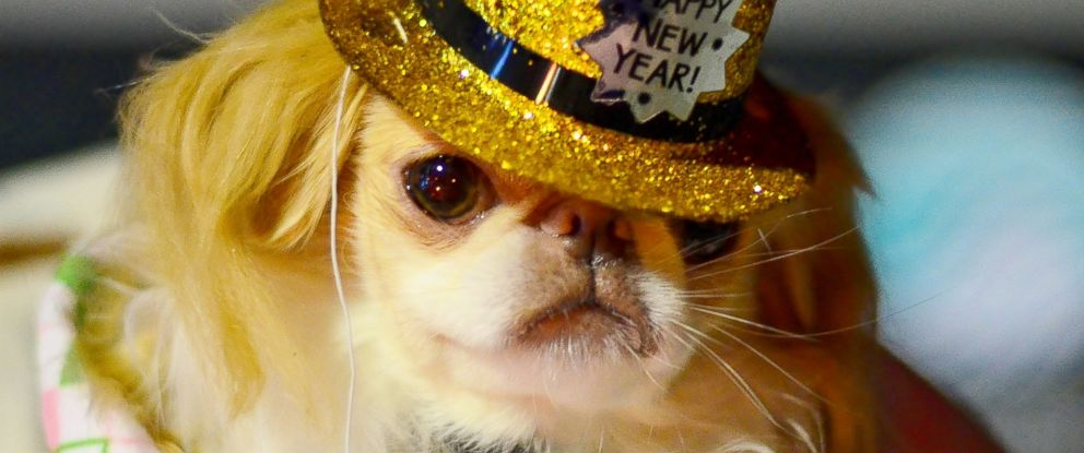 PHOTO: Here are some tips for celebrating New Years Eve safely with your pet.
