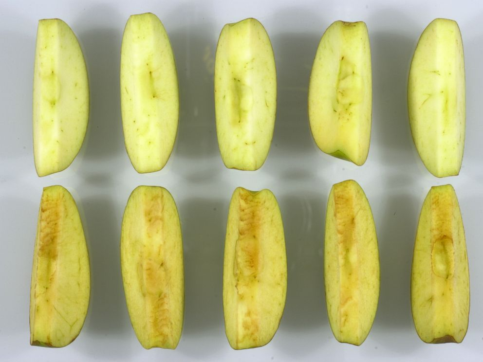 PHOTO: The difference between Arctic Granny slices, top, and conventional Granny slices on the bottom is seen here.