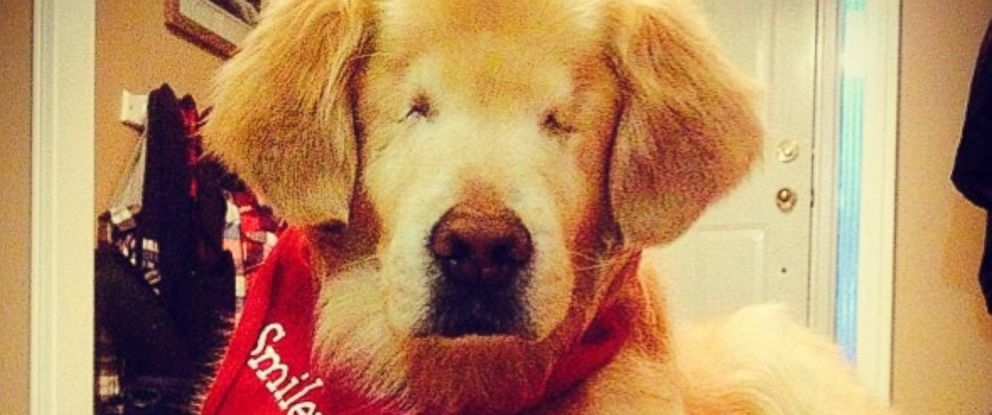 PHOTO: Smiley is a service dog who was born without sight.