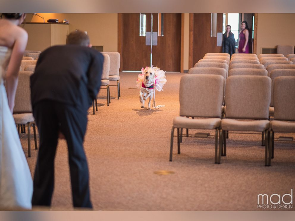 PHOTO: Wedding photographer Maddie Peschong captured tender moments between bride Valerie Parrott and her service dog, Bella, at Parrotts recent wedding.