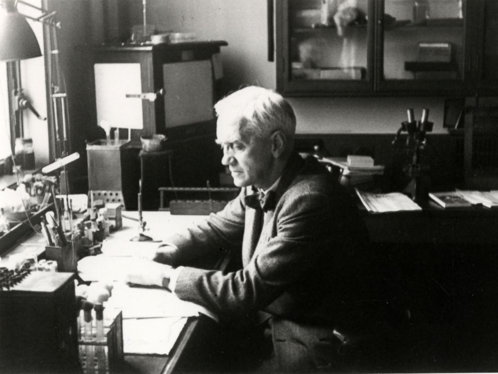 PHOTO: Sir Alexander Fleming at work in his laboratory, in this undated photo, in London.