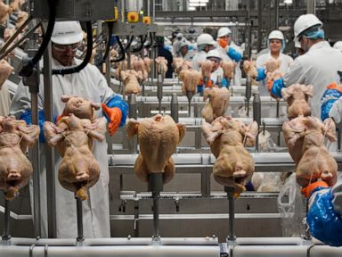 USDA rethinks approach to controlling salmonella in poultry